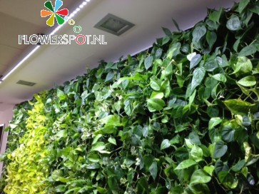 Linear-Spot-LED GREENWALL 90cm, 90º, 45Watt, tbv Living-Wall