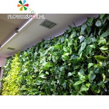 Linear-Spot-LED GREENWALL 120cm, 90º, 60Watt, tbv Living-Wall