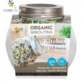Buzzy® Organic Spruitgroente pot Pikante Salade