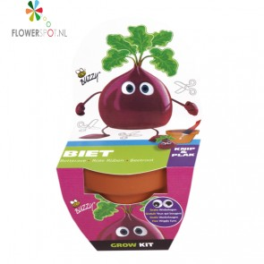 Buzzy kids grow kit biet