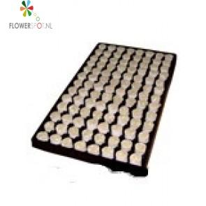 Paperplug 104/tray 8 Per Doos