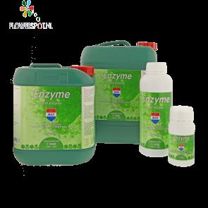Enzyme 1 Ltr